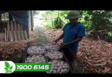 Xem Bí quyết làm giàu từ nuôi gà hướng trứng – Khởi nghiệp 127