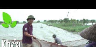 """Xem """"Nổ tung"""" sức mạnh kéo thả cá ngày mưa bão – Khởi nghiệp 238"""