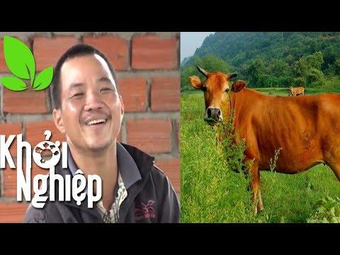 """Xem Nông hộ """"gan"""" nhất Khởi nghiệp và mộng nuôi bò làm giàu – Khởi nghiệp 222"""