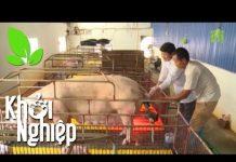 Xem Bỏ nghề lái xe, rẽ sang nuôi lợn: Thắng hay bại? – Khởi nghiệp 353