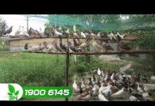Xem Khởi nghiệp 169: Bí quyết làm giàu của ông chủ trang trại bồ câu 9X