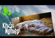 """Xem """"Phong ba bão táp"""" không ngăn nổi ý chí khởi nghiệp nuôi lợn – Khởi nghiệp 319"""