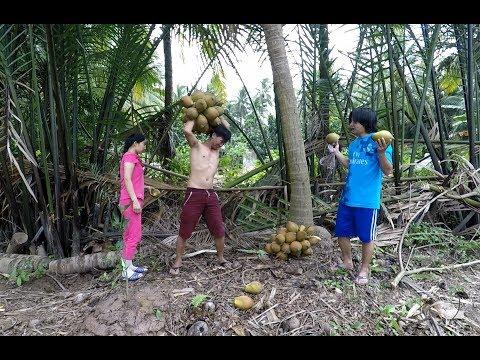 Xem Đi mua dừa chùm đón khách – Hương vị đồng quê – Bến Tre – Miền Tây