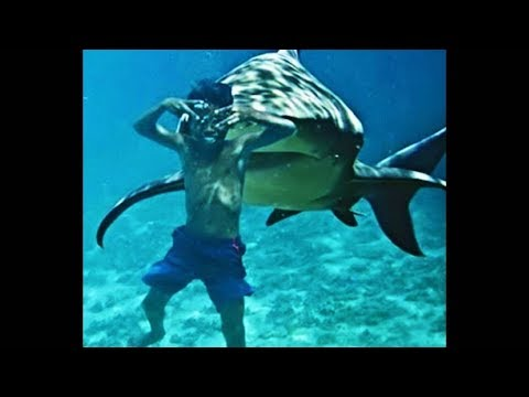 Xem kid falls into shark tank and couldn't get out in time…