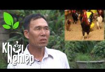 Xem Lão nông U50 theo đuổi giấc mơ đổi đời với gà Lạc Thủy – Khởi nghiệp 351
