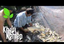 Xem Người nuôi cá cũng loay hoay trong cơn bão giá? – Khởi nghiệp 192