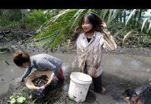 Xem Em gái đi bắt hoi khi hồ đã cạn – Hương vị đồng quê – Bến Tre – Miền Tây