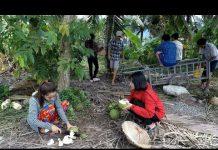 Xem Làng xóm kéo nhau đi coi tát cá lóc – Hương vị đồng quê – Bến Tre – Miền Tây