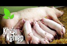 """Xem Bạo tay chi tiền triệu lắp dàn loa """"xịn"""" cho lợn nái """"thưởng nhạc dưỡng thai"""" – Khởi nghiệp 371"""