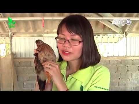 Xem Khởi nghiệp số 89: Những sai lầm thường gặp khi nuôi gà thả vườn
