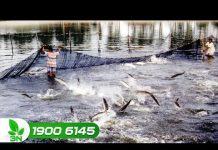 Xem Khởi nghiệp số 94: Nuôi cá không cần sử dụng thuốc