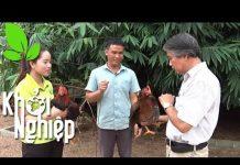 Xem Tuyệt chiêu nuôi gà bất bại của anh Hoàng Ngọc Năm – Khởi nghiệp 255