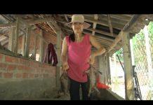 Xem Tin Tức 24h: Khởi nghiệp và làm giàu từ nghề nuôi dúi núi ở Quảng Nam