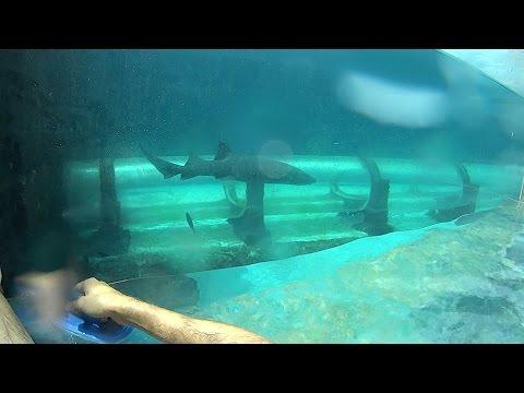 Xem Shark Tank Water Slide at Atlantis