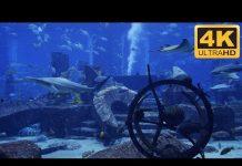 Xem 4K Shark Aquarium – Amazing Sharks and Manta Rays! ★-★-★-★-★