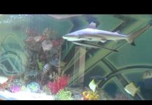 Xem Huge private shark tank with fish