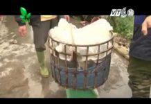 Xem Khởi nghiệp số 11  Mô hình nuôi cá trắm, chép, rô phi   anh Dương Minh Toàn