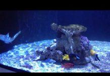 Xem Blacktip reef shark tank levert av saltvann.no