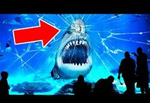 Xem Why No Aquarium In the World Has a Great White Shark?