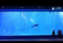 Xem Shark tank-Nanning's Ocean park-Lumini Aquarium light