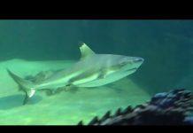 Xem Huge shark tank at a petstore