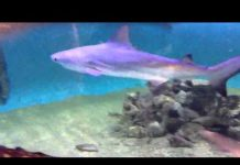 Xem Shark Tank in friends basement