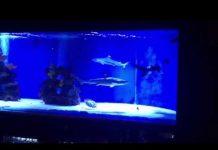 Xem Saltwater Fish Tank, Blacktip Shark Aquarium for Home