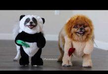 Xem Pandaloon Panda Puppy and Friends Halloween Costumes AS SEEN ON SHARK TANK!
