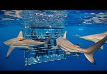 Xem Michin Shark Tank