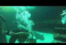 Xem Shark Tank Smita Fresh Bait