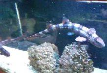 Xem Shark Aquarium Feeding