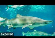 Xem Shark Cam powered by EXPLORE.org