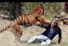 Xem Thế giới động vật – Những cuộc đi săn loài hổ hoang dã