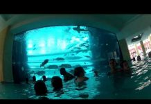 Xem GoPro Shark Tank Water Slide POV!!