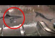 Xem Shark Tank Breaks in Mall