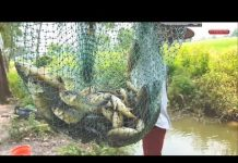 Xem Khám phá chia sẻ điểm câu cá rô đồng giật cá mỏi tay