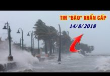 Xem Tin bão số 4 mới nhất ngày 14/8: Gió giật cấp 11, biển động dữ dội