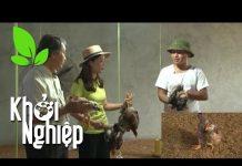 Xem Chủ quan, người nuôi gà nhận trái đắng – Khởi nghiệp 248