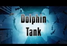 Xem Shark Tank Parody – Dolphin Tank