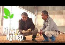 Xem Làm giàu từ nuôi gà, chữa bệnh có chuyên gia  – Khởi nghiệp số 302 | SĐTdep.com