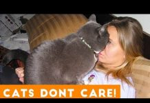 View Cats Don't Care Funny Pets Videos | Best Funny Cat Videos Ever