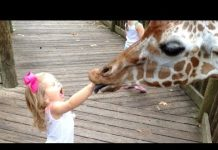View FORGET CATS! Funny KIDS vs ZOO ANIMALS are WAY FUNNIER! – TRY NOT TO LAUGH