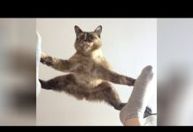 View It's TIME for SUPER LAUGH! – Best FUNNY CAT videos