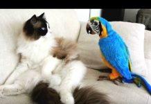 见 滑稽的鹦鹉讨厌的猫