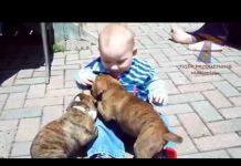 见 儿童和狗玩的孩子和狗滑稽编译