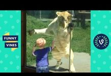 View TRY NOT TO LAUGH –  Cute Kids VS. Animals Fails Compilation | Funny Vines Videos July 2018