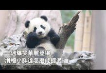 见 《當熊不讓》一週爆笑華麗登場,滑稽小胖達怎麼能錯過?! | iPanda