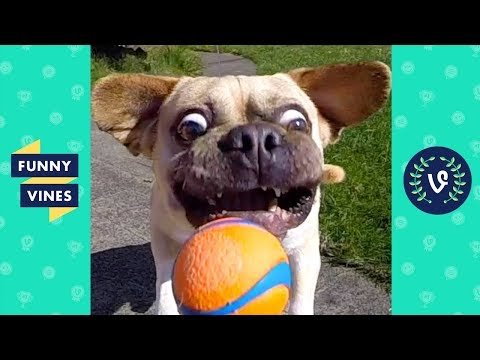 View TRY NOT TO LAUGH – FUNNY ANIMALS Compilation | Dogs & Cats | Funny Vines June 2018