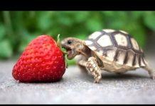 见 龟 – 可爱和滑稽的乌龟视频。编辑|新建,HD