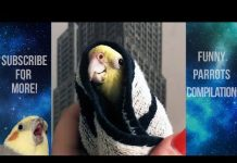 View Funny Parrots and Cute Birds Compilation #62 – 2018